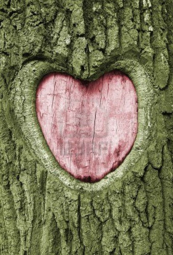 Carve out your heart for keeps in an old oak tree