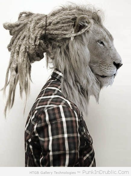 Rasta Lion With Dreads But the lion of judah/king