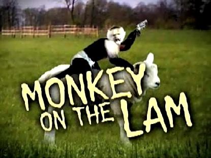 MonkeyOnTheLam.jpg