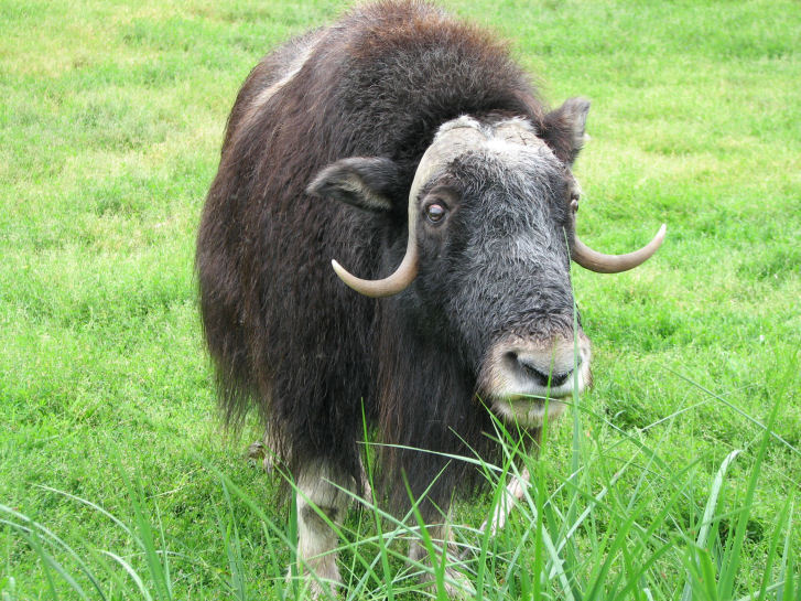 I keep a ox in the sock / I will sock it to you – Boom Bap! Lyrics ...