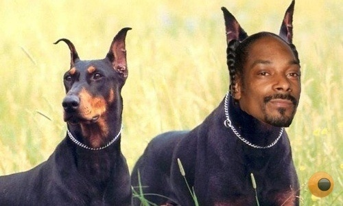 Dog That Looks Like Snoop Dog