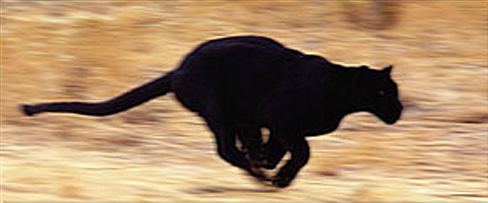 You ever seen a panther maneuver? / I'm even.. – Take Notice Kanye West Meaning