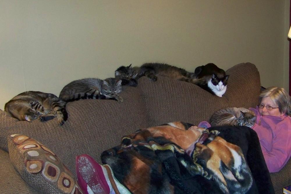 cats meow cam