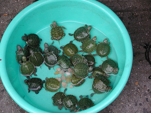 cute-baby-turtles.jpg