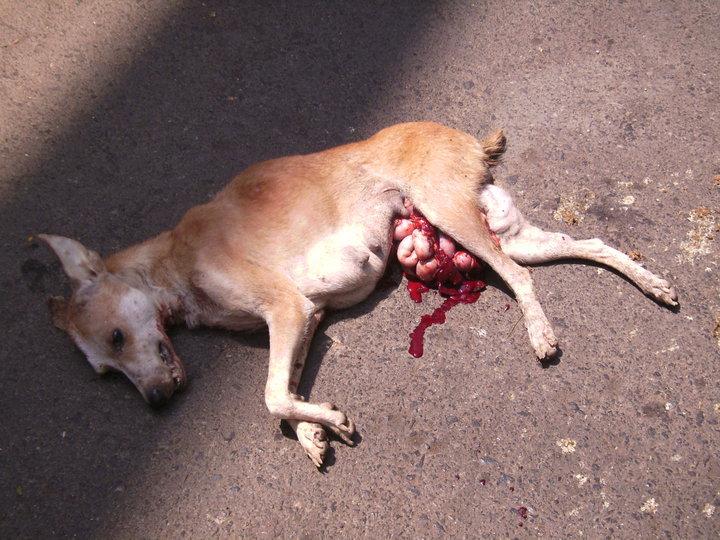 Cat Dog Eat Dead Owner