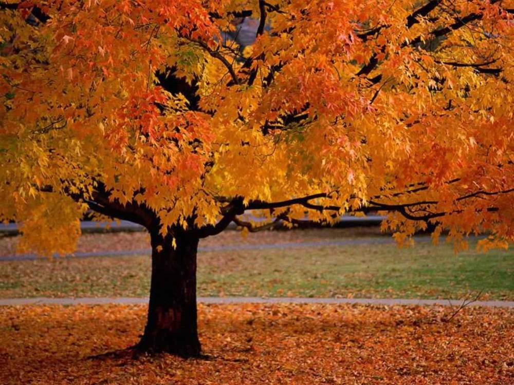 Image result for images of fall trees