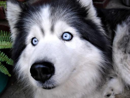 Puppy Dog Eyes Lyrics Meaning