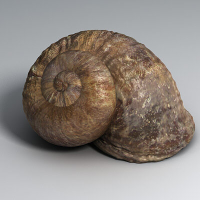 When snails are touched they Snail Shell