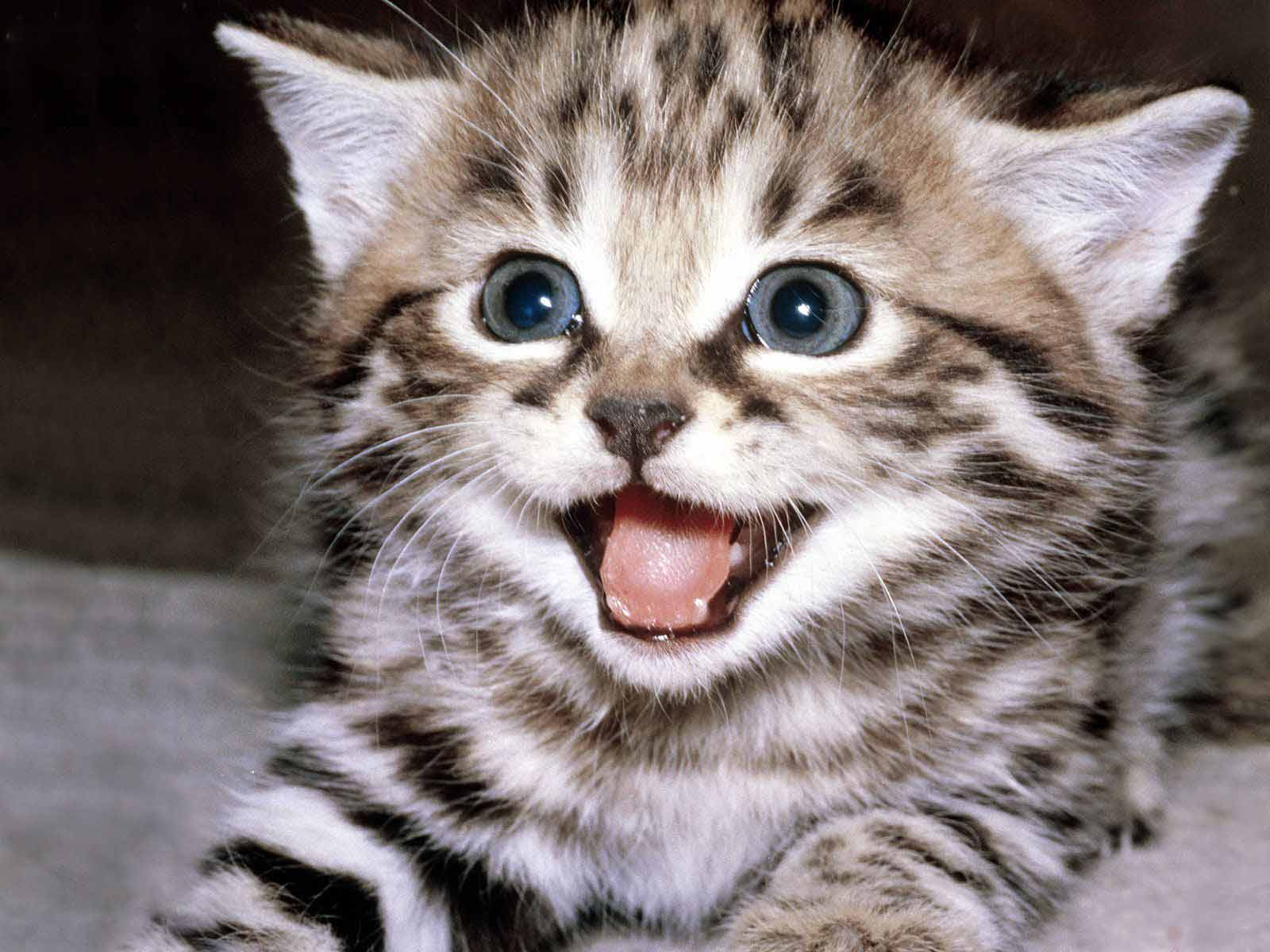 Image Credits Slactiverse  Kitten