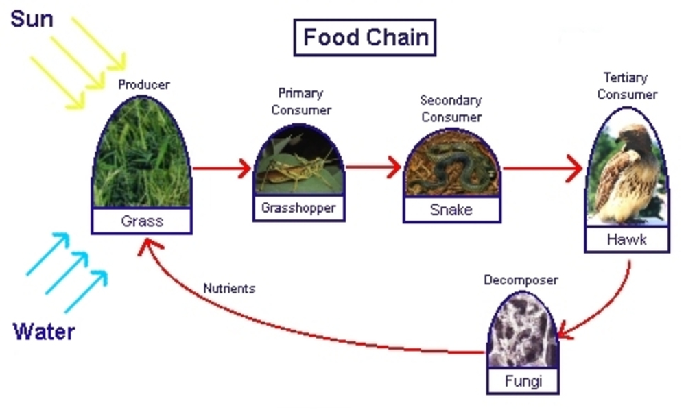 The GOAT food chain    Genius