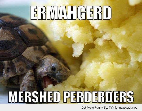 http://s3.amazonaws.com/rapgenius/funny-ermahgerd-turtle-mash-pics.jpg