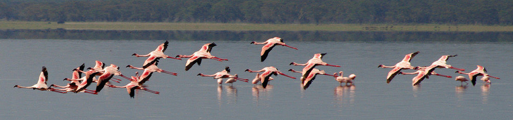 flying flamingoes ii by - photo #47