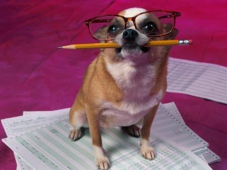 כלב עם עיפרון