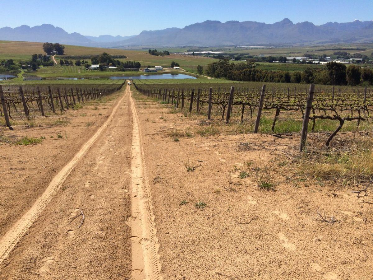 Farm for sale in Stellenbosch Farmers Winery