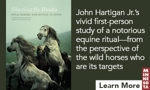 Ad: Dark green background with cover image for Shaving the Beasts: Wild Horses and Ritual in Spain by John Hartigan Jr. on left. On right, white text reading John Hartigan Jr. vivid first-person study of a notorious equine ritual—from the perspective of the wild horses who are its targets. Underneath that, there is a white bar with dark green text reading Learn More next to the University of Minnesota Press's logo, a vertical maroon rectangle with MINNESOTA stacked vertically.