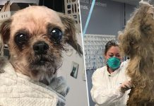 Ellie Mae, the dog that went under a beauty transformatiomn and lost 9 pounds.