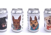 Shelter dogs put on beer cans
