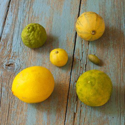 Citrus 101