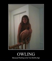 Owling-is-the-new-planking14