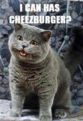 I-can-has-cheezburger_20_281_29