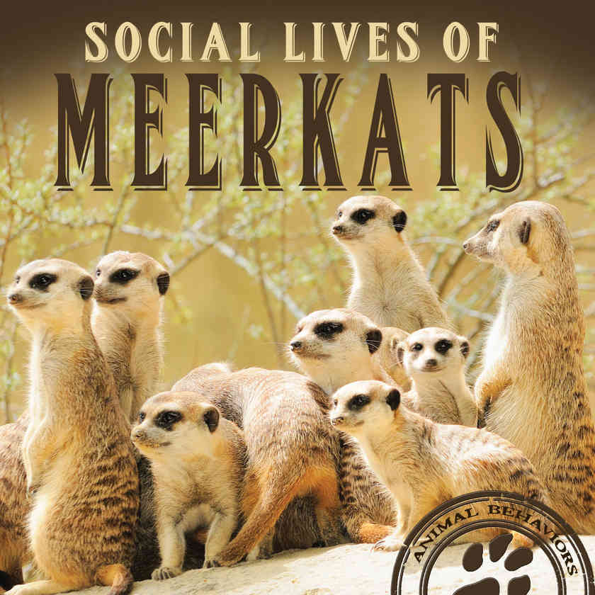 Social Lives of Meerkats