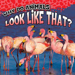 Why Do Animals…