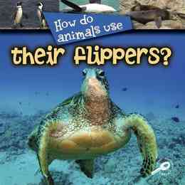 How Do Animals Use… Their Flippers?
