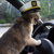Cat%20sailor%20drive