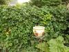 Garden_005_thumb