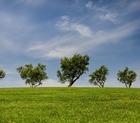 Associazioni per l'ambiente: quali sono e di cosa si occupano?