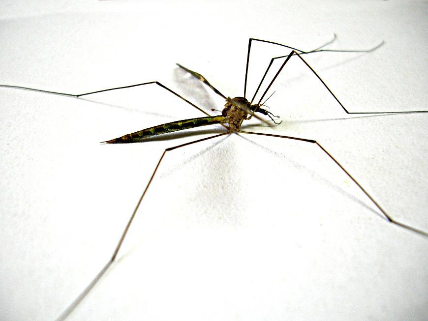 Paesi a rischio di malaria