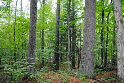 86 GREEN MEADOWS WAY LOT 2, Keene, NY 12942 - Photo 2