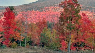 310 ALSTEAD ROAD, Keene, NY 12942 - Photo 1