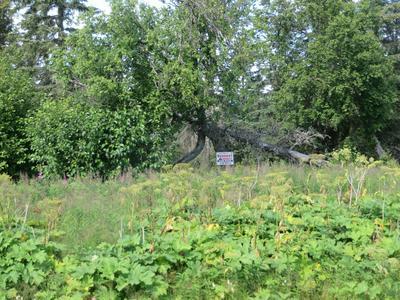 14185 STERLING HWY, Ninilchik, AK 99639 - Photo 1