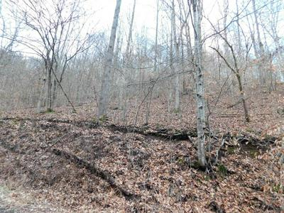 0 COON BRANCH ROAD, IAEGER, WV 24844 - Photo 1