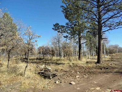 TBD MCKENZIE SPRINGS RANCH ROAD, Placerville, CO 81430 - Photo 2