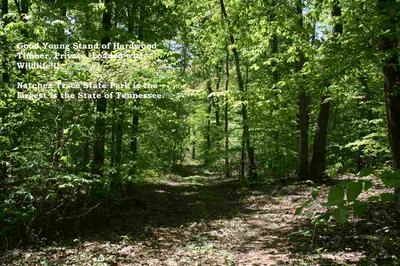 000 FIDDLER TRAIL, Wildersville, TN 38388 - Photo 1