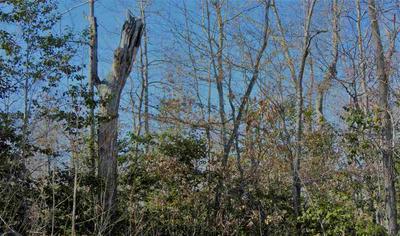 0 CHESTER QUINN LANE, Parsons, TN 38363 - Photo 2