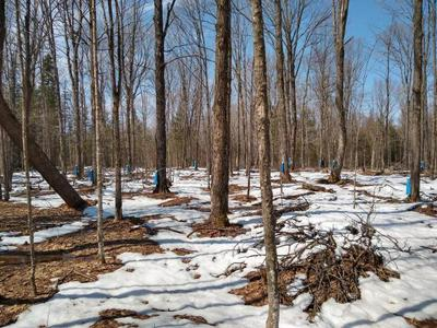 40 ACRES LANGES RD, Irma, WI 54442 - Photo 1