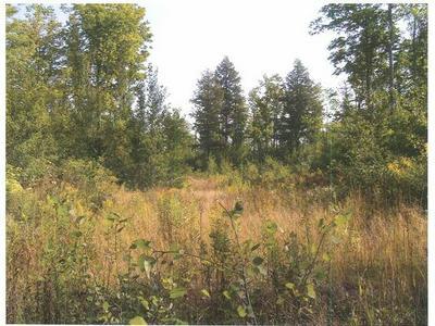 ON FOREST RD 250, Bergland, MI 49910 - Photo 2