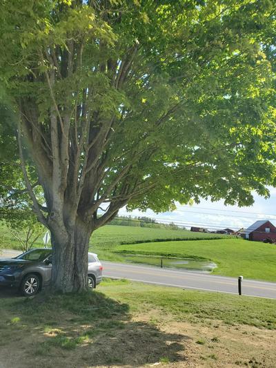 E MIDLAND TRL, Williamsburg, WV 24991 - Photo 1