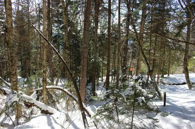 RED SPRUCE DRIVE, SNOWSHOE, WV 26209 - Photo 2