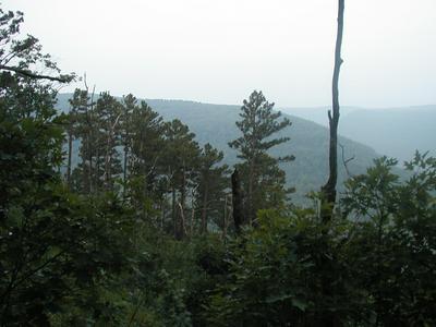 SMITH MOUNTAIN (CR8800) ROAD, Deer, AR 72628 - Photo 1