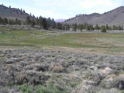 LOT 32 TOIYABE MEADOWS HWY 395 # 32, Bridgeport, CA 93517 - Photo 1