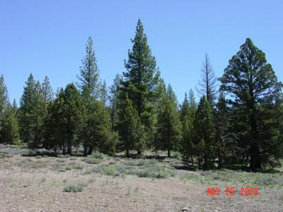 10316 DIXIE VALLEY RD, Chilcoot, CA 96105 - Photo 2