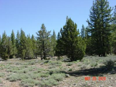 10348 DIXIE VALLEY RD, Chilcoot, CA 96105 - Photo 2