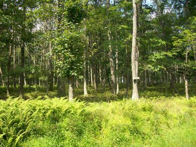 LOT 44 OAKENSHIELD DR, Tamiment, PA 18371 - Photo 1