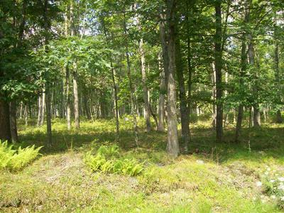 LOT 44 OAKENSHIELD DR, Tamiment, PA 18371 - Photo 2