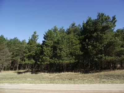 JOHNSON ROAD, Kaleva, MI 49645 - Photo 1