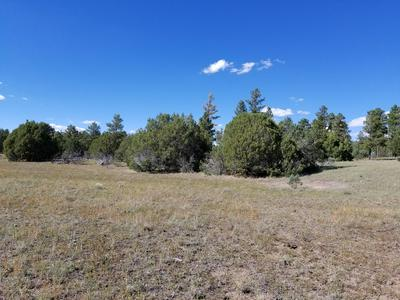 1593 XAVIER ROAD, Pinedale, AZ 85934 - Photo 2